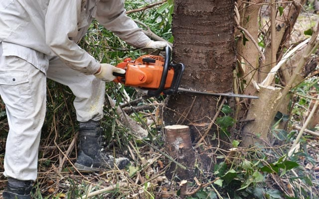 Chainsaw Operations